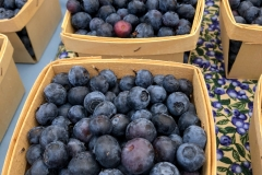 Kradel_Blueberries_115