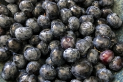 Kradel_Blueberries_4216