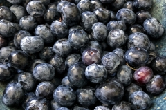 Kradel_Blueberries_4217