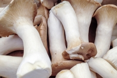Kradel_Oyster-Mushrooms_0262