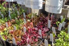 Kradel_Plants_0241