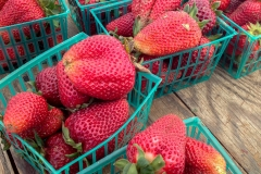 Kradel_Stawberries_0239