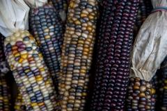 Kradel_Indian-Corn