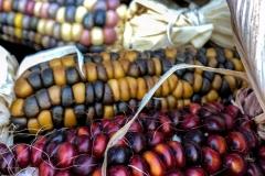 Kradel_Indian-Corn_4611
