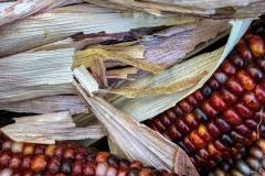 Kradel_Indian-Corn_4621
