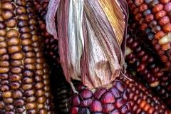 Kradel_Indian-Corn_4692