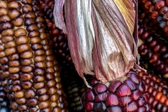 Kradel_Indian-Corn_4693