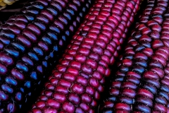 Kradel_Indian-Corn_4695