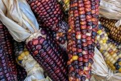 Kradel_Indian-Corn_4700