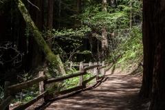 Kradel_Muir-Woods_9921