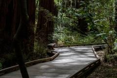Kradel_Muir-Woods_9939