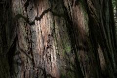 Kradel_Muir-Woods_9956
