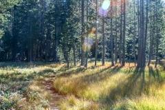 Kradel_Yosemite_3112