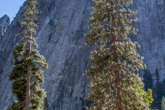 Kradel_Yosemite_3678