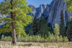 Kradel_Yosemite_3691